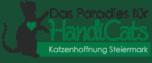Katzenhoffnung Steiermark – das Paradies für HandiCATs®